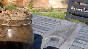 back yard ant farm mason jar ant colony surprise swarmers