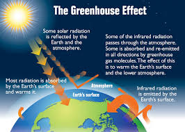 Global Warming Worksheet Worksheet On Global Warming And Greenhouse Effect