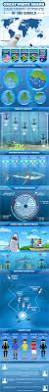 best 25 great white shark ideas on pinterest great white shark