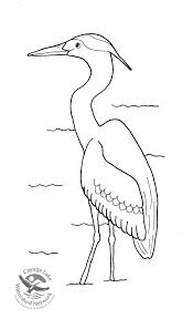 coloring pages and activities cayuga lake watershed network