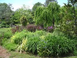 non native plants new free public education series on sustainable landscaping