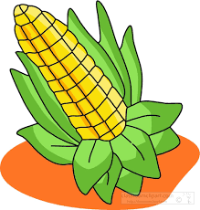 thanksgiving clipart corn color background classroom clipart image