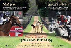 tartan fields tartan fields twitter