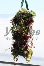 Hanging Succulent Planter by Hanging Grow Bag For Succulent Plants