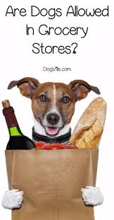 best 25 hotels that allow dogs ideas on pinterest hotels that