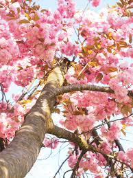free images tree branch fruit leaf flower bloom log