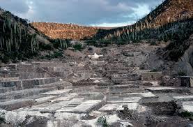 inside the indiana jones like world of cactus explorers kcet