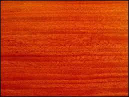 species spotlight santos mahogany tom s workbench
