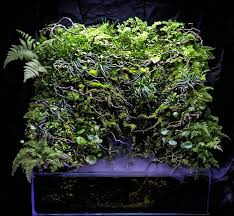 Aga Aquascape 2016 Aga Aquascaping Contest Entry 560 Paludarium Pinterest
