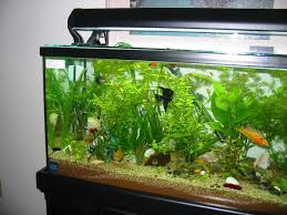 Aquarium Designs To Suit Your Home Ideas  Homes - Home aquarium designs