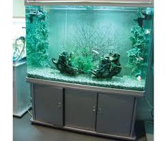 143 best tanked images on aquarium ideas betta