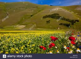 Italy On The Map by Trees Form A Map Of Italy On The Hillside Above The Wildflowers Of
