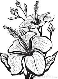 tattoo flower drawings jasmine flower drawing google search flowers drawing pinterest