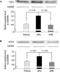 the neurosteroid allopregnanolone promotes proliferation of rodent