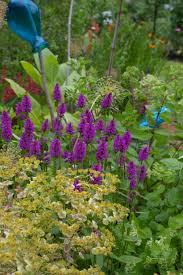 fun hardscape and plants in jeanne u0027s garden in washington fine