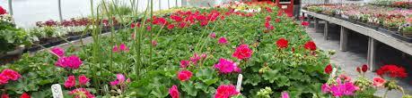 robin u0027s flower pot garden center u0026 nursery