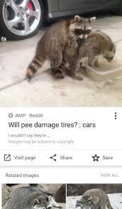emergency raccoon anarcharaccoon twitter