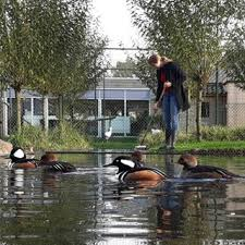 harteman wildfowl home to avicultural education