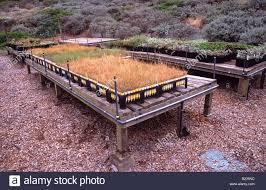 san francisco native plants native plants nursery at fort funston golden gate national