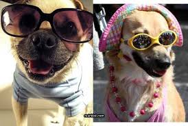Dog With Glasses Meme - funny pictures of animals wearing glasses