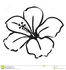 Flower Designs For Drawing Best 25 Hibiscus Drawing Ideas On Pinterest Hibiscus Flower