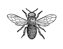 10 best honey bee tattoo images on pinterest visual identity