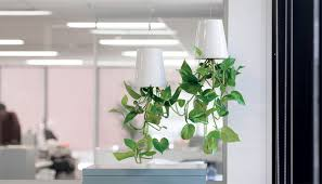 on making wonderful upside down planters