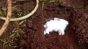 burying my 2 months old dead bunny youtube
