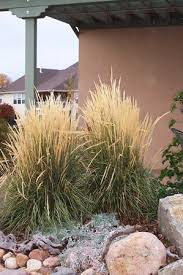cutting back ornamental grasses clark design