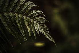 Free Picture Leaf Nature Fern Forest Nature Fern Winter Green Photo For Free