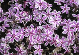 drought tolerant plants best plants for drought