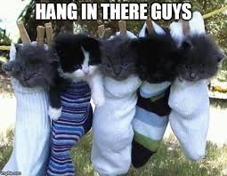 Hang In There Meme - hang in there kittens memes imgflip