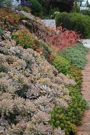 35 best succulents images on pinterest plants landscaping and