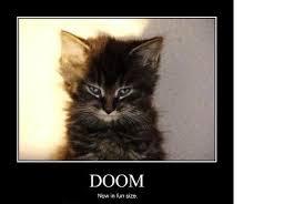 Stupid Cat Meme - please no more stupid cat meme pics