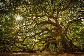 21 unique and spectacular trees and forests around the world