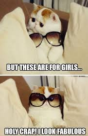 fabulous kitten imgur