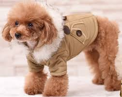 paddington clothes paddington duffle dog coat with faux fur trim free shipping