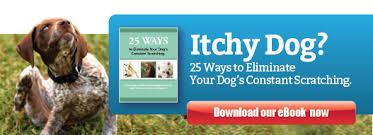 Make Bathtime Fun For Your Dog How Often Should You Bathe Your Dog Ruff Ideas