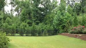 nature sounds backyard youtube