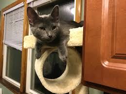 a cat named bitches bitchesthecat twitter