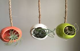 hanging air plant how to care for the lovely air plants that adorn your home