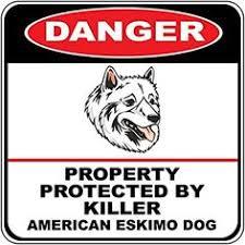 american eskimo dog breeders new england paintings of american eskimo dogs american eskimo dog mailbox