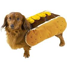 costumes for dogs casual canine hot diggity dog with mustard costume for