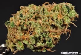 golden goat marijuana strain library potguide com