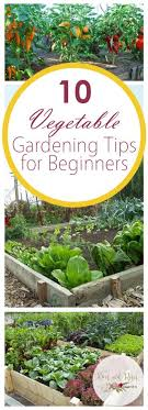 Garden Tips And Ideas 10 Vegetable Gardening Tips For Beginners Bees And Roses