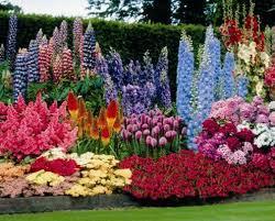 shade loving houseplants list flowering plants on perennial