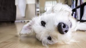 what causes tumors in dogs canna pet