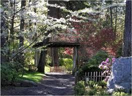 flowers serene garden tree rock flowers pathway blossom fence