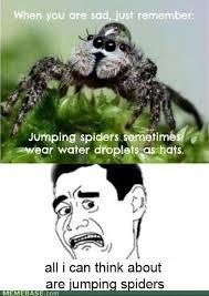 Sad Spider Meme - spiders pictures funscrape