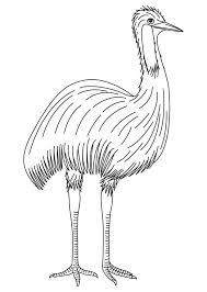 australian bird coloring download free australian bird